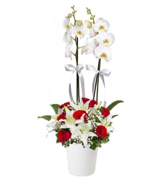 Çiftli Beyaz Orkide 7 Kırmızı Gül Lilyum