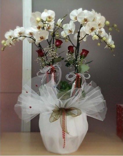 4 Dal Dal Beyaz, Nature Orkide