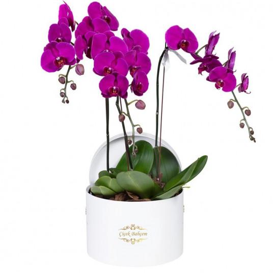 Beyaz Yuvarlak Kutuda 4 Dal Orkide