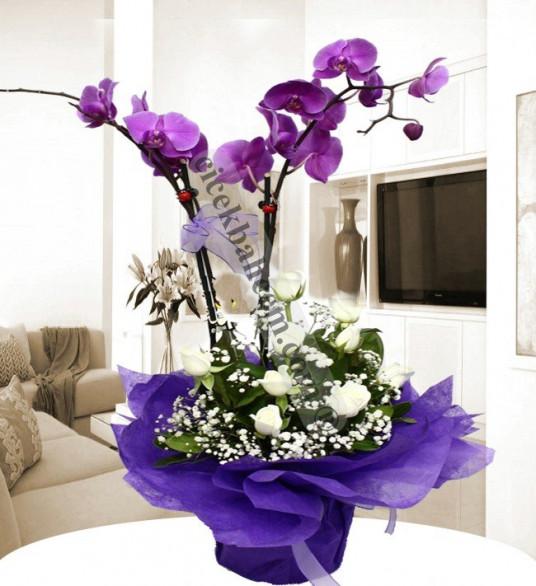 Beyaz Gül ve mor Orkide