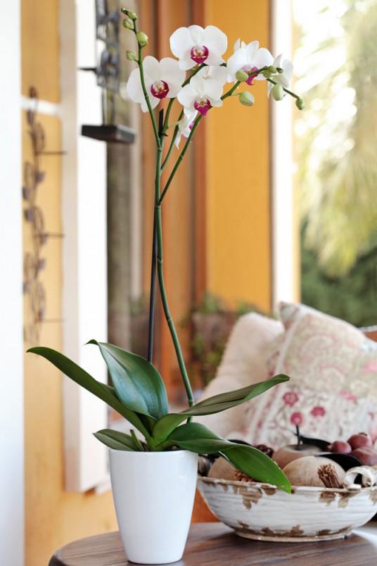 Tek Dal Beyaz, Lily Orkide Ankara Orkide