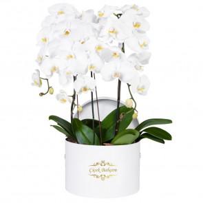 Yuvarlak Beyaz Kutuda 4 Dal Beyaz Orkide