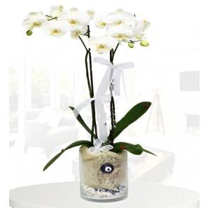 Nazar Değmesin Beyaz Orkide