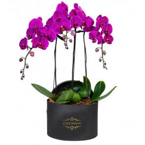 Yuvarlak Kutuda 4 Dal Mor Orkide