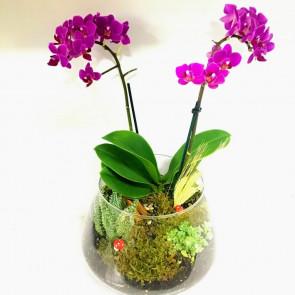 Mini Mor Orkide ve Teraryum Bir Arada Sunumu
