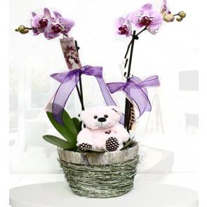 Tatlı Bir Sürpriz 'Orkide ve Oyuncak'
