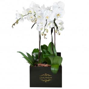 Siyah Kare Kutuda 4 Dal Beyaz Orkide