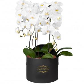 Siyah Kutu İçinde 4 Dal Beyaz Orkide