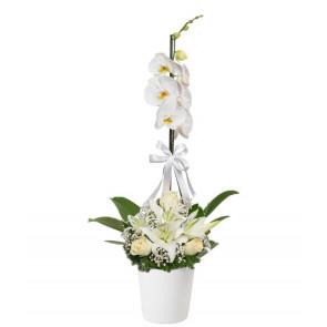 Tekli Beyaz Orkide 3 Beyaz Gül Lilyum
