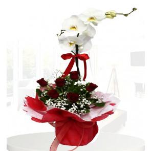 Orkide 7 Kırmızı Gül ® ORK121